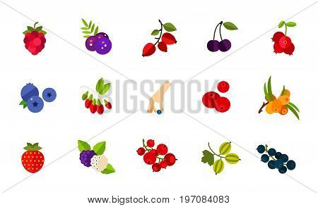 Wild berries icon set. Raspberry Acai Dogrose berry Dark bird cherry Cowberry Blueberry Goji Picking berry Cranberry Sea buckthorn Strawberry Mulberry Red currant Gooseberry Currant stock photo