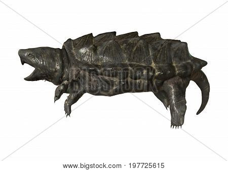3D rendering of an alligator snapping turtle or Macrochelys temminckii isolated on white background stock photo