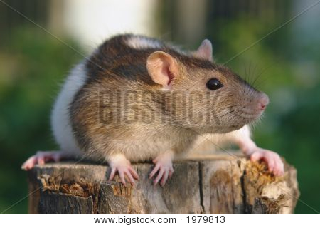 Funny mouse sitting at the green background stock photo
