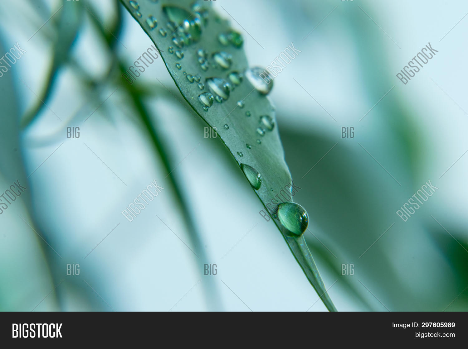 background,beauty,blurred,branches,close-up,closeup,day,design,dreamlike,droplet,drops,ecosystem,environment,extreme,focus,foliage,forest,frame,green,growth,happiness,horizontal,leaves,like,lush,luxuriant,macro,meditating,morning,natural,nature,no,people,photography,plant,rain,rainforests,scenic,season,softness,summer,texture,tranquility,tree,tropical,tropics,vibrant,water,wet,zen