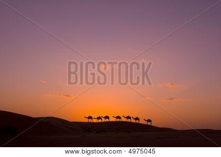camel caravan in the desert of orient stock photo