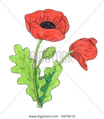 Easy Simple Poppy Flower Drawing