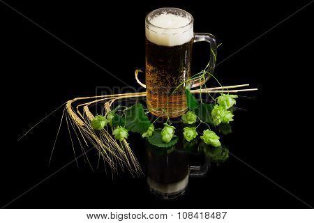Lager beer with foam in beer glassware branch of hops with leaves and cones several ears of barley on a dark background with reflection. Isolation. stock photo