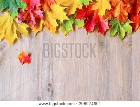 Autumn background with colorful autumn leaves. Maple autumn leaves on the wooden background. Autumn leaves, free space for text. Background with maple autumn leaves. Autumn still life with autumn leaves
