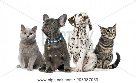 Dog and cat, Group of kittens and puppies sitting, isolated on white