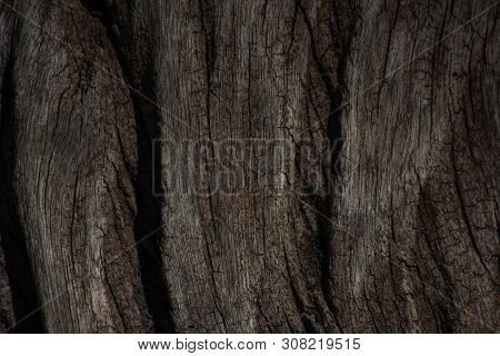 Age Old Weather Textured Wood Surface, South Africa stock photo