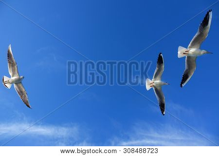 Close up seagulls flying over blue sunny sky stock photo
