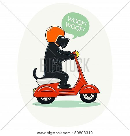 Funny illustration of a cute Scottish terrier riding old school red scooter. Hand drawn cartoon dog on a motorbike. stock photo
