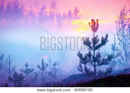 Beautiful Nature Sunrise Foggy Landscape. Misty Forest. Spring Nature. Park with Trees. Tranquil Bac