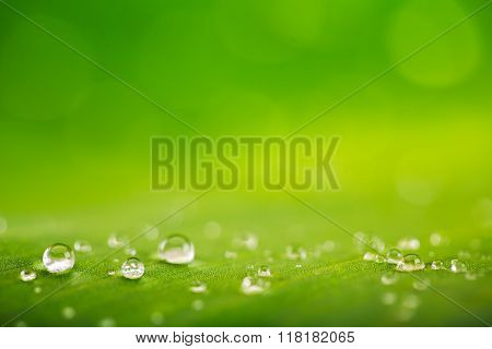 Rain Drops Over Fresh Green Leaf Texture, Natural Background