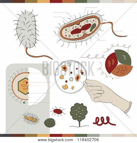 Here you can see how does the bacteria looks inside it's structure and components. stock photo