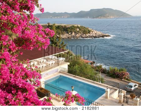 Famous mediterranean flowers front on sea background. stock photo