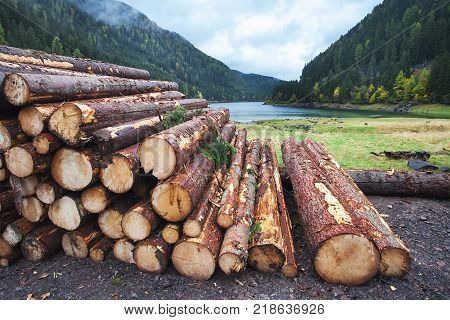 Wooden logs of pine woods in the forest, stacked in a pile in Dolomites. Freshly chopped tree logs stacked up on top of each other in a pile. stock photo