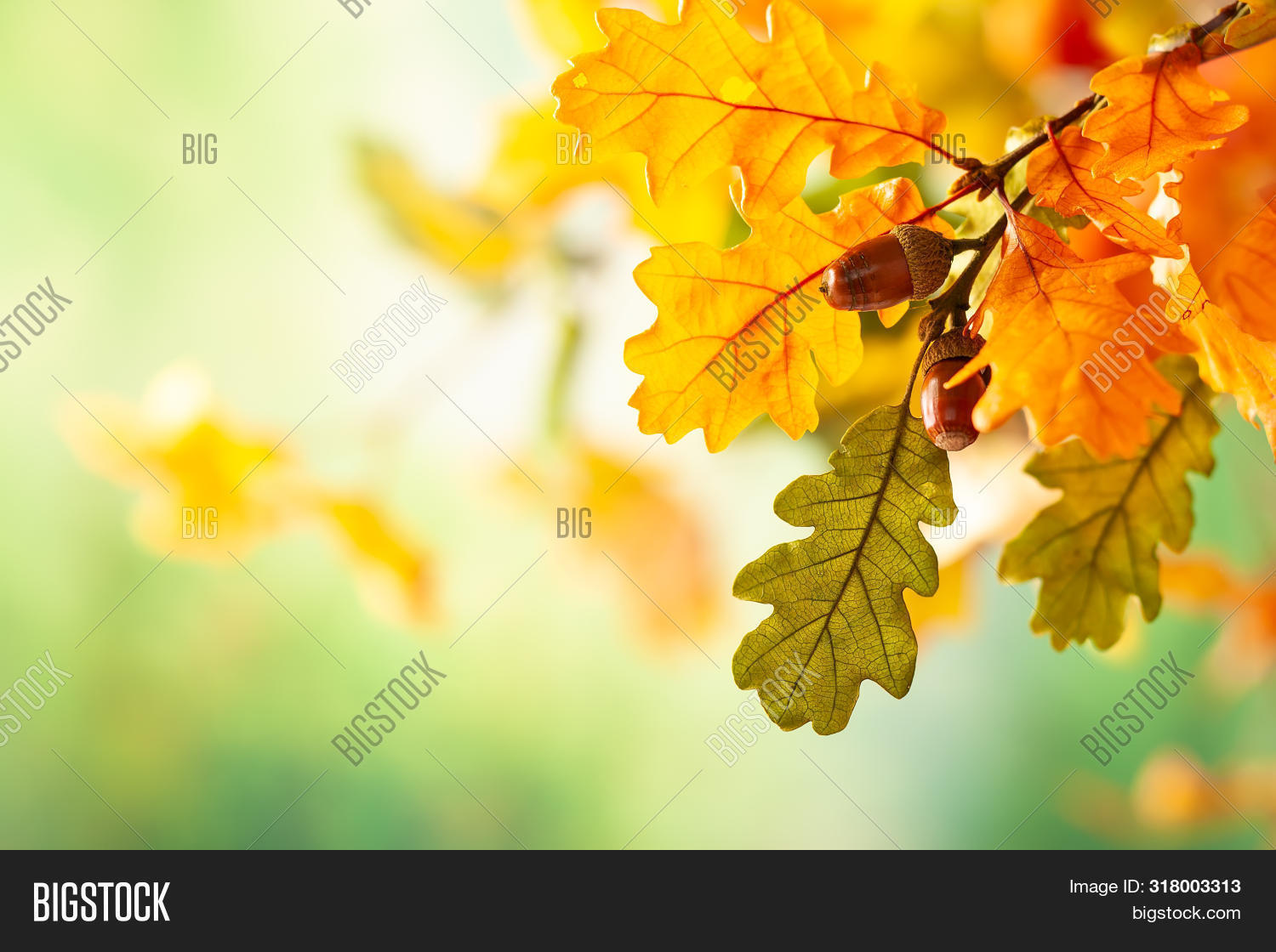 acorn,autumn,autumn leaves,autumnal background,background,beautiful,beauty,bokeh,botany,branch,bright,celebration,colorful,composition,concept,day,decor,design,fall,falling leaves,festive,foliage,forest,garden,green,halloween,harvest,holiday,landscape,leaf,leaves,nature,november,oak,october,orange,outdoor,park,plant,red,season,seasonal,sun,sunlight,thanksgiving,traditional,tree,trees,wood,yellow