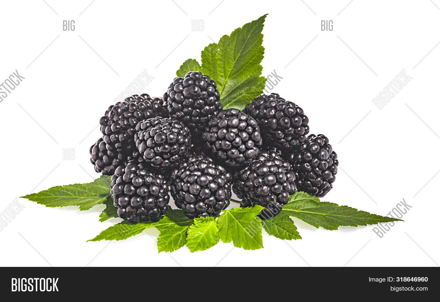 A pile of ripe blackberries isolated on a white background
