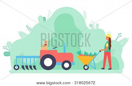 Woman working on field vector, lady with carriage and carrots. Tractor used in agriculture, rancher busy with agricultural job. Machinery for farm. Flat cartoon stock photo
