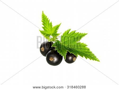 Currant. Black currant with leaf. Heap of fresh black currant fruit. stock photo
