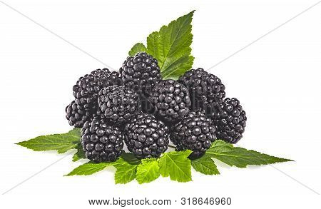 A pile of ripe blackberries isolated on a white background stock photo