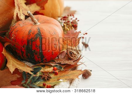 Happy Thanksgiving. Pumpkins with fall leaves, berries, cinnamon, anise, acorns, nuts, , autumn flowers on white knitted sweater. Hygge lifestyle, cozy autumn mood. stock photo