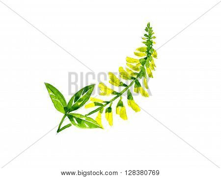 Watercolor summer insulated sweet clover on white background stock photo