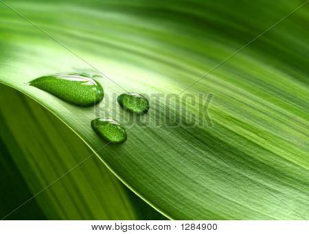 Collection d'images pour le thème  Vert