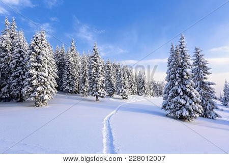 On a frosty beautiful day among mountains are magical trees covered with white fluffy snow against the idyllicl landscape. Time for touristic adventures.The wide trail leads to the majestic winter forest. stock photo