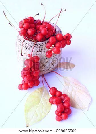 Schisandra red in ceramic bag. Red ripe schizandra in bucket. Five flavor berry. Fresh red ripe berries isolated on white. Crop of ripe fruits stock photo