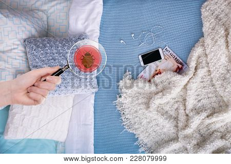 Woman with magnifying glass detecting bed bug in bedroom stock photo