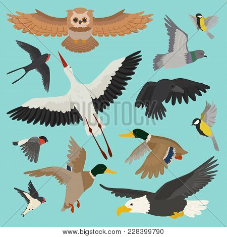 Bird vector cartoon flying birdie owl dove and duck with feather wings illustration set bullfinch stork or swallow for birdfancier isolated on background. stock photo