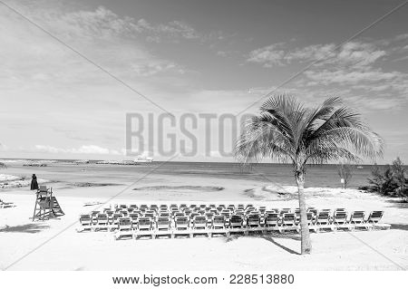 🔥 Beach With Blue Chairs And Palm Tree On White Sand At