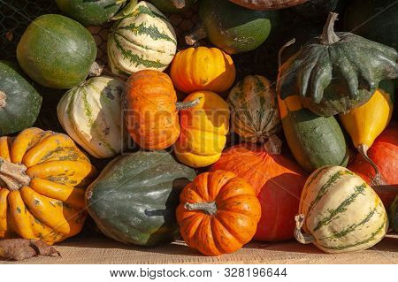 Mix of ripe green, orange, yellow pumpkins, squash and gourds with different varieties and shapes from the fresh harvest in the wooden box. Including: Pattypan squash, Crookneck squash, Acorn squash (Pepper Squash), Cucurbita pepo Ten Commandments, pumpki stock photo