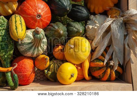 Display with mix of ripe, red, orange, yellow, green pumpkins, squash and gourds with different varieties and shapes from the fresh harvest in wooden box. Including: ornamental gourds, Cushaw Green Striped Squash, Delicata Squash, orange Kabocha squash, C stock photo