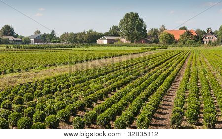 Dutch tree nursery in an agricultural landscape stock photo