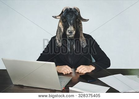 male businessperson or worker coder with head of a black goat on a blue background in the office at Desk. A malicious employee. The concept of aggressive government or officialdom. An evil official. stock photo