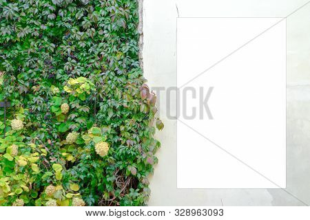 Blank white mock up template of signboard with information board or advertising billboard on old building wall with creeper plants leaves stock photo