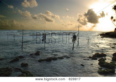 Stilt fishermen at Weligama, Sri Lanka. This is the only place in world where people fish this way. stock photo