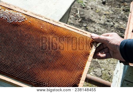 The bee-keeper pulls honeycombs from the beehive stock photo