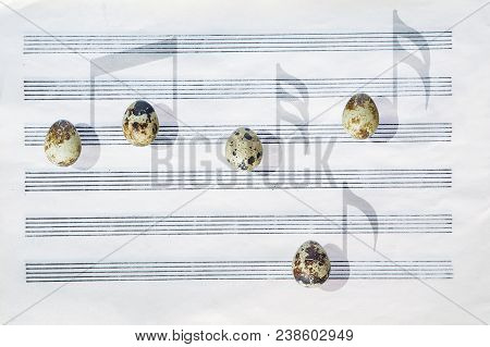 Japanese quail eggs in front of a blank six-stave music paper are casting shadows in the shape of musical notes. stock photo