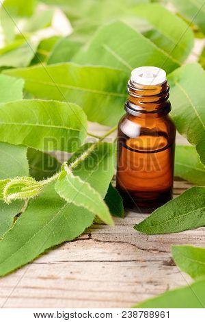 Lemon Eucalyptus essential oil in the amber bottle, with fresh eucalyptus leaves stock photo