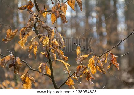 natural scenery showing dry brown autumn leaves in forest ambiance stock photo