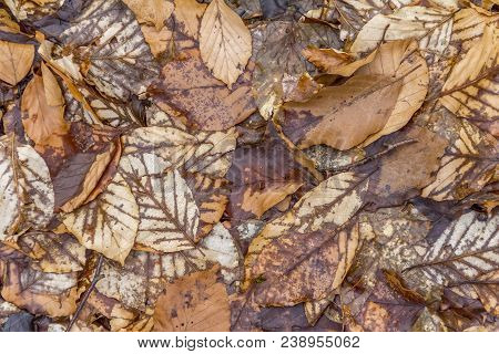 natural scenery showing brown autumn leaves seen from above stock photo