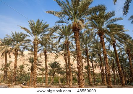 Ein Gedi oase in the Negev desert near the Dead Sea Israel stock photo