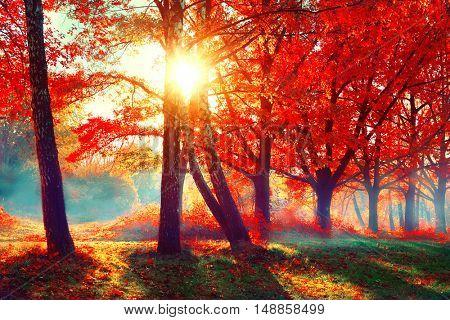 Autumn. Fall scene. Beautiful Autumnal park. Beauty nature scene. Autumn landscape, Trees and Leaves