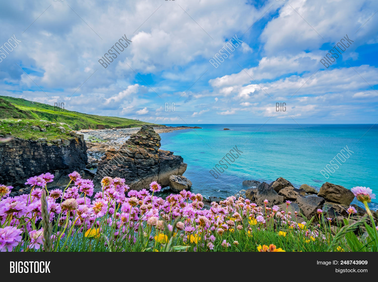 Pink Sea Thrift Flowers On The Stunningly Beautiful Coast In St