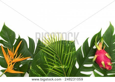 Still life photo tropical concept with border of monstera vine leaf with Heliconia flower and dragon fruit top view flat layout mockup stock photo