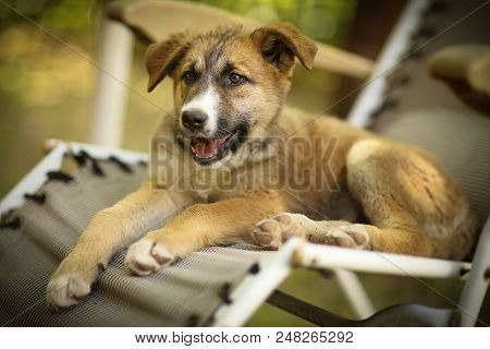 kids hand wasing puppy in bathtub close up photo on summer garden background stock photo