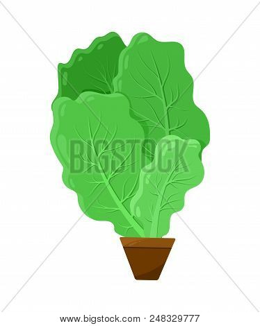 Shpinat leaves potted into small brown container, green salad stack, healthy vitaminic food, colorful vector illustration, natural vegetable plant stock photo