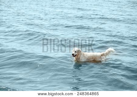 high angle view of golden retriever standing in sea stock photo