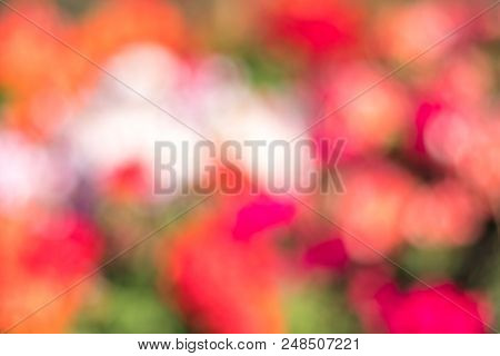 blurred multi colored red, orange, violet and green colorful dots background abstract bokeh flowers, flowery spring stock photo