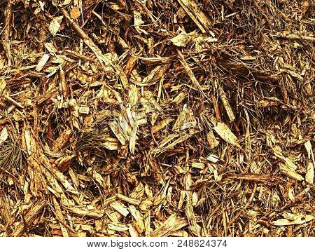 Waste sawmill and bark chips. Stack of raw material. Log yellow and brown wooden splinters. stock photo